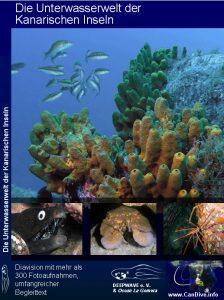 Candive_Unterwasserwelt