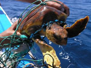 Meeresmüll tötet.