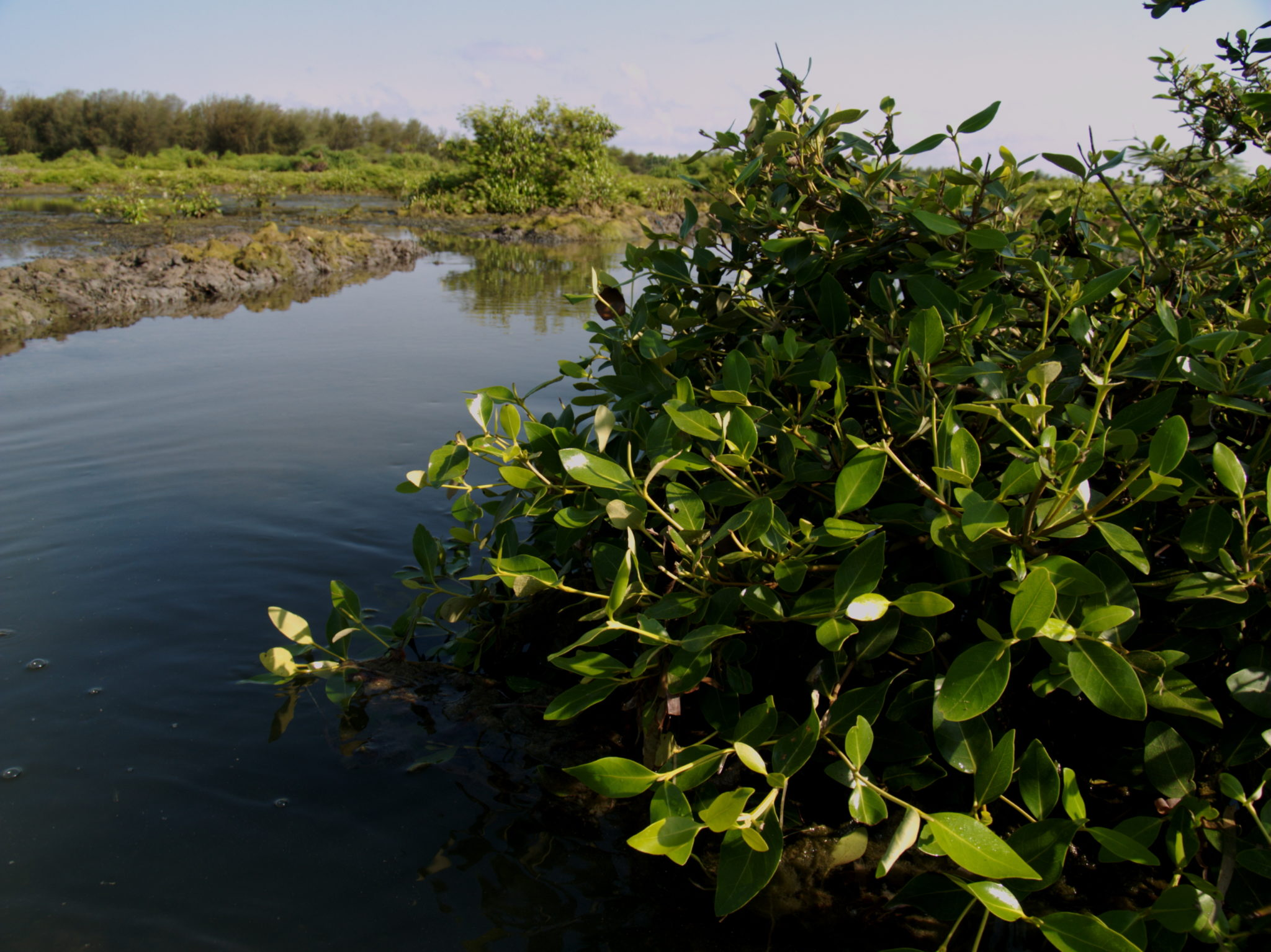 MangroveLagoon 003