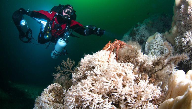 Korallen, foto uli kunz, greenpeace