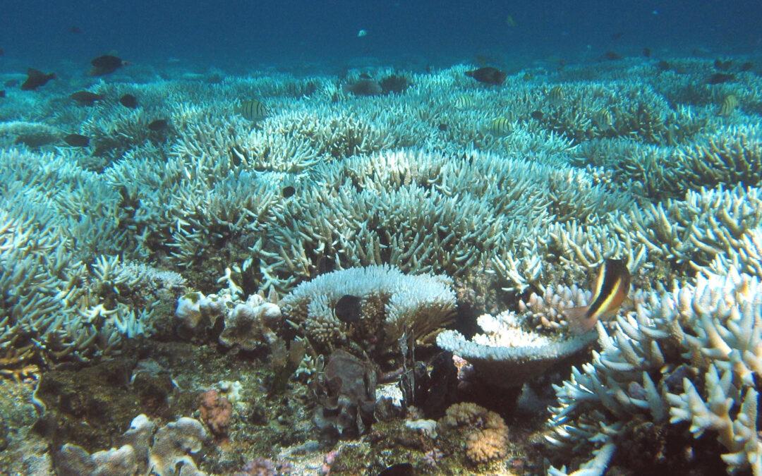 Reefflatbleachin