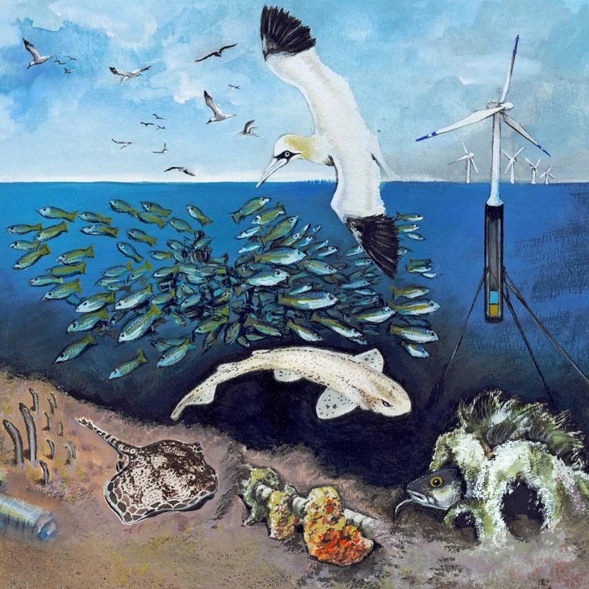 Die Meeresfibel