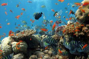 Ein Korallenriff mit vielen kleinen bunten Fischen