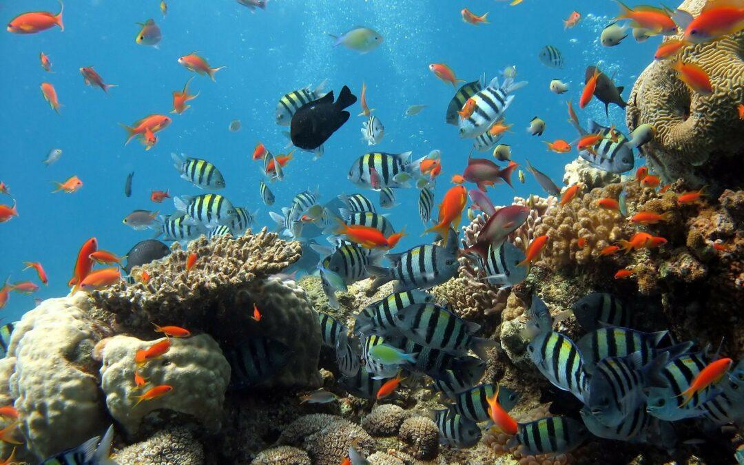 kaum_noch_neue_korallen_im_great_barrier_reef