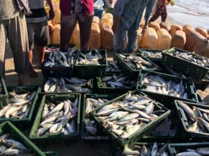 Viele tote Fische liegen in verschiedenen Kisten auf einem Fischerboot, im Hintergrund zieht man die Beine dreier Männer
