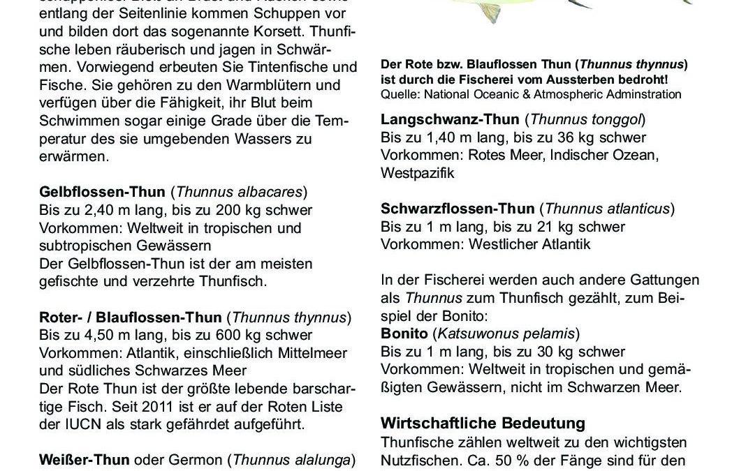 DWfacts_Thunfisch_2016