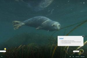 Ein neugieriger Seehund spielt im Seegras in der Ostsee