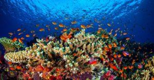 Unterwasseraufnahme eines Riffs. Zwischen verschiedenen bunte Korallenarten schwimmen kleine orangene Fische umher.