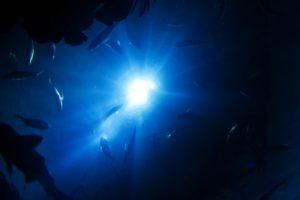 Man schaut vom dunklen Meeresgrund auf nach oben an die helle Wasseroberfläche, ein paar Fische schwimmen herum