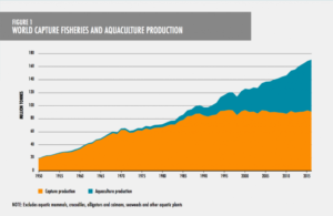 Graph showing the increase of fisheries and aquaculture over time. In 2018 the amount of fish from aquaculter was about equal to wild-caught fish.