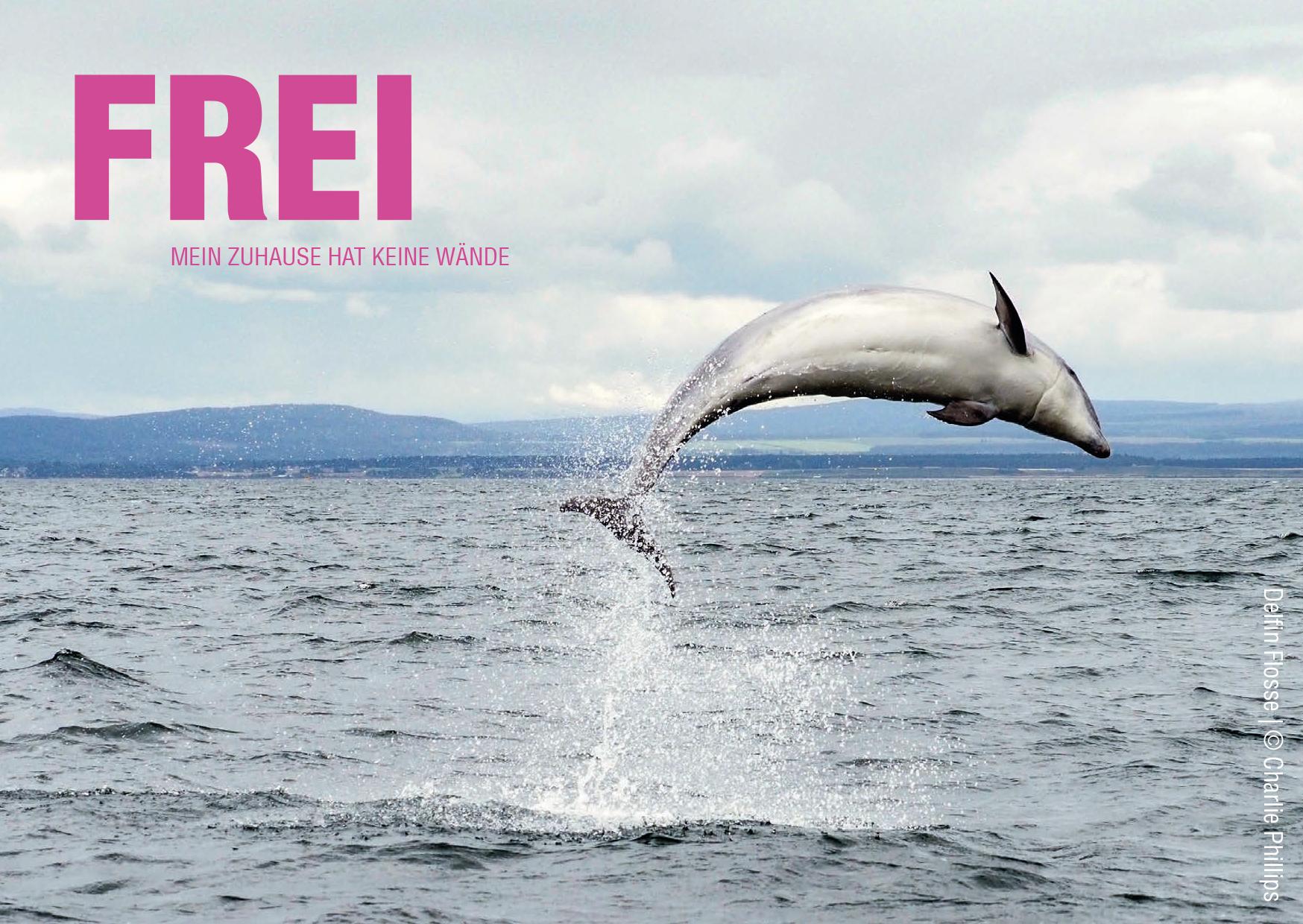 Ein Delfin springt aus einem offenen Meer. In der oberen Ecke des Bildes steht der Text: Frei, mein Zuhause hat keine Wände