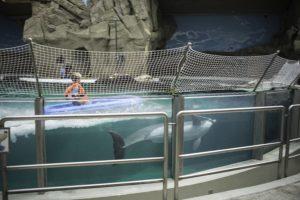 Ein kleiner Junge sitzt in einem Wasserbecken auf einem kleinen Boot, das unter Wasser von einem Delfin gezogen wird