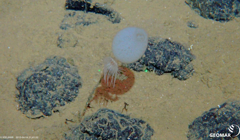 Steine und Felsen zwischen Sand unterwasser in der Tiefsee