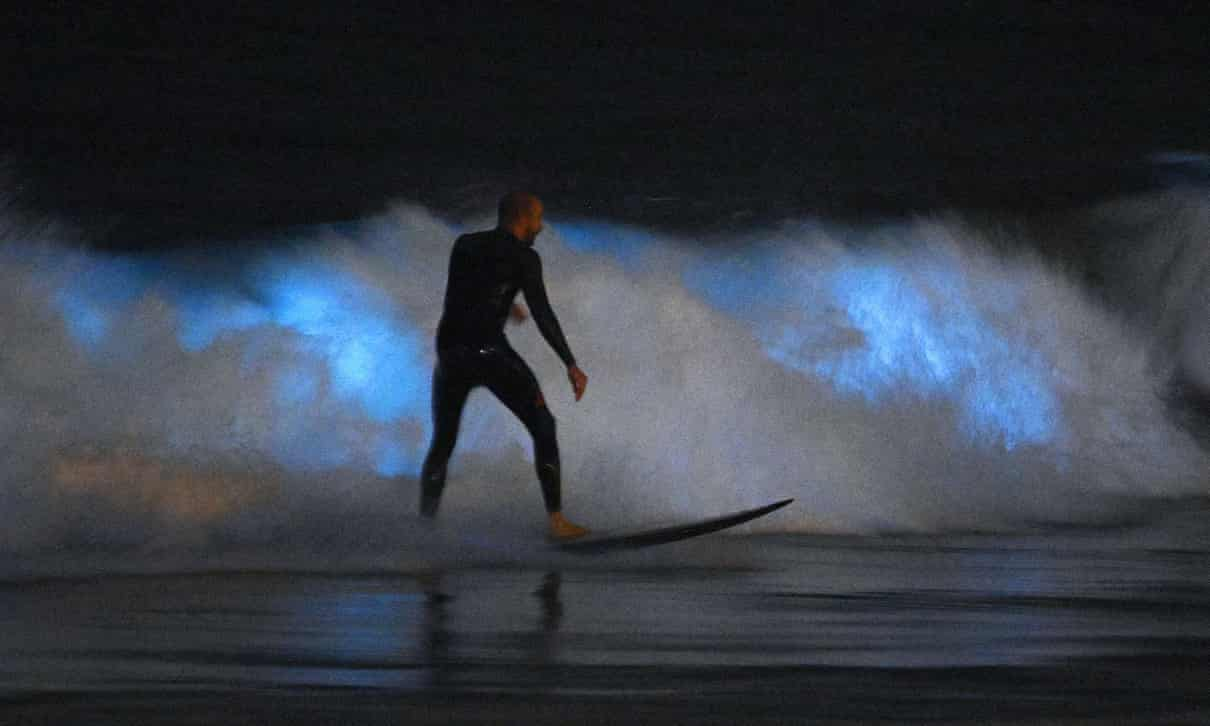Surfers riding waves that glow neon blue in the dark.