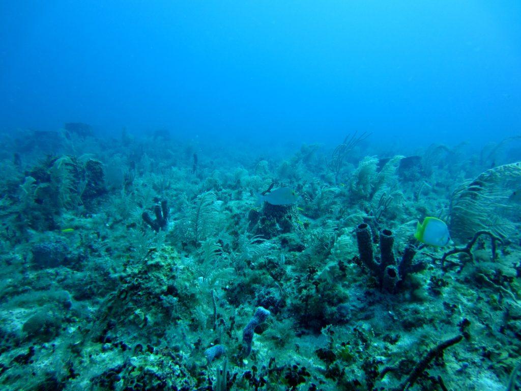 Aufnahme von Korallen, Algen, Fischen (ein Doktorfisch und ein Schmetterlingsfisch), und Schwämmen in einem Korallenriff