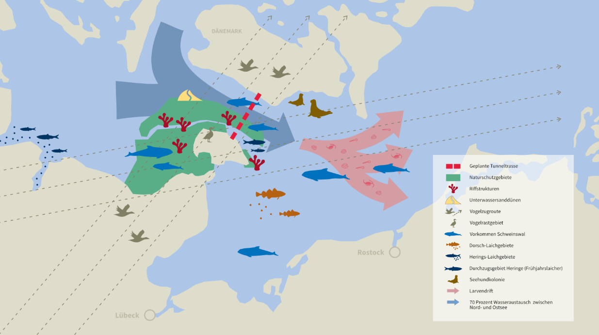 Eine Übersicht des Meeresschutzgebietes und die dort lebenden Tierarten, wodurch die Fehmarnbeltquerung führen wird.