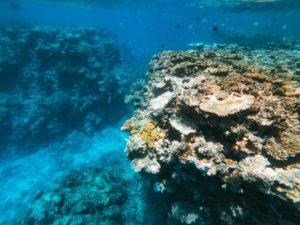 Links und rechts ragen zwei große, bunt bewachsene Steinkorallen aus dem Meeresboden, im Hintergrund tummeln sich kleine Fische