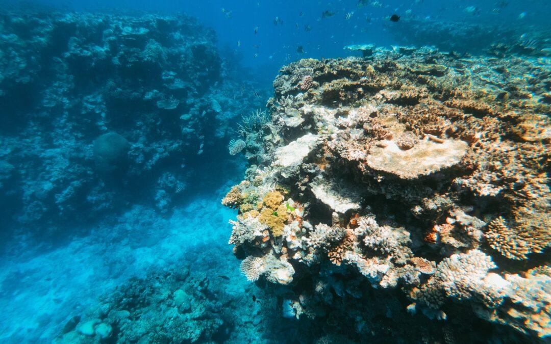 korallensterben_nur_die_weichen_bleiben