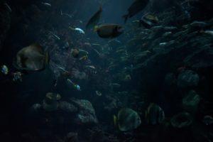 Ein Schwarm Fische schwimmt in düsterem Wasser, die bunten Farben der Fische wirken blass.