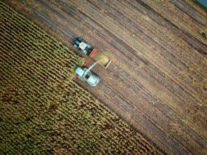 Blick von oben auf ein Maisfeld, welches geerntet wird.