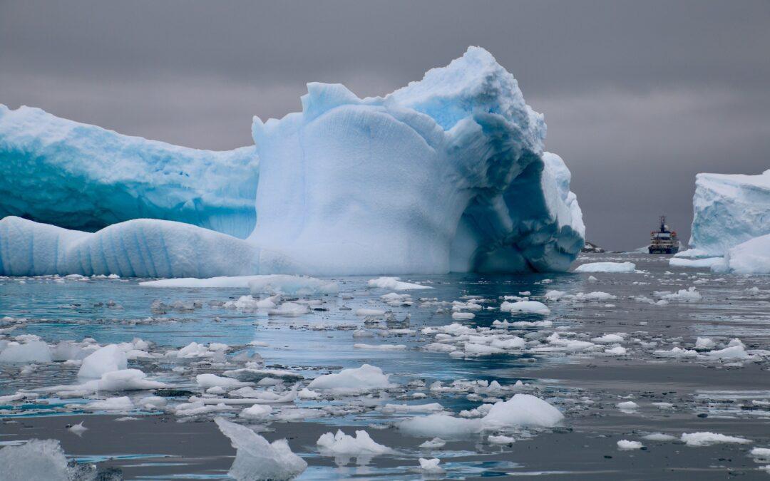 Finnwale_Antarktis_Elephant_island