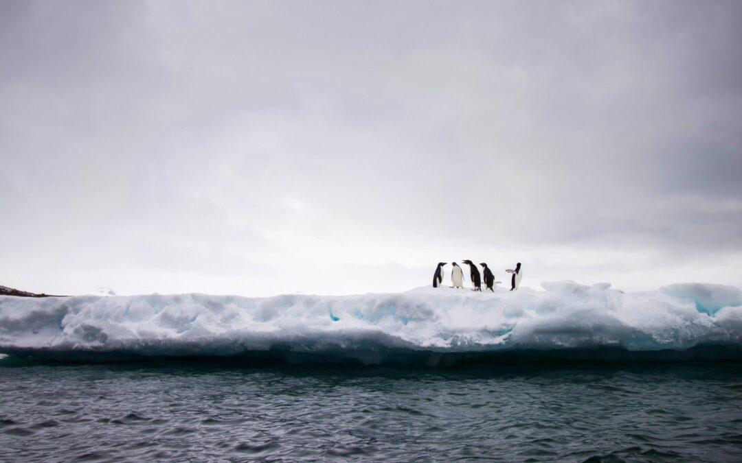 Unterwasserlärm_betrifft_pinguine_genauso_wie_wale_und_delfine