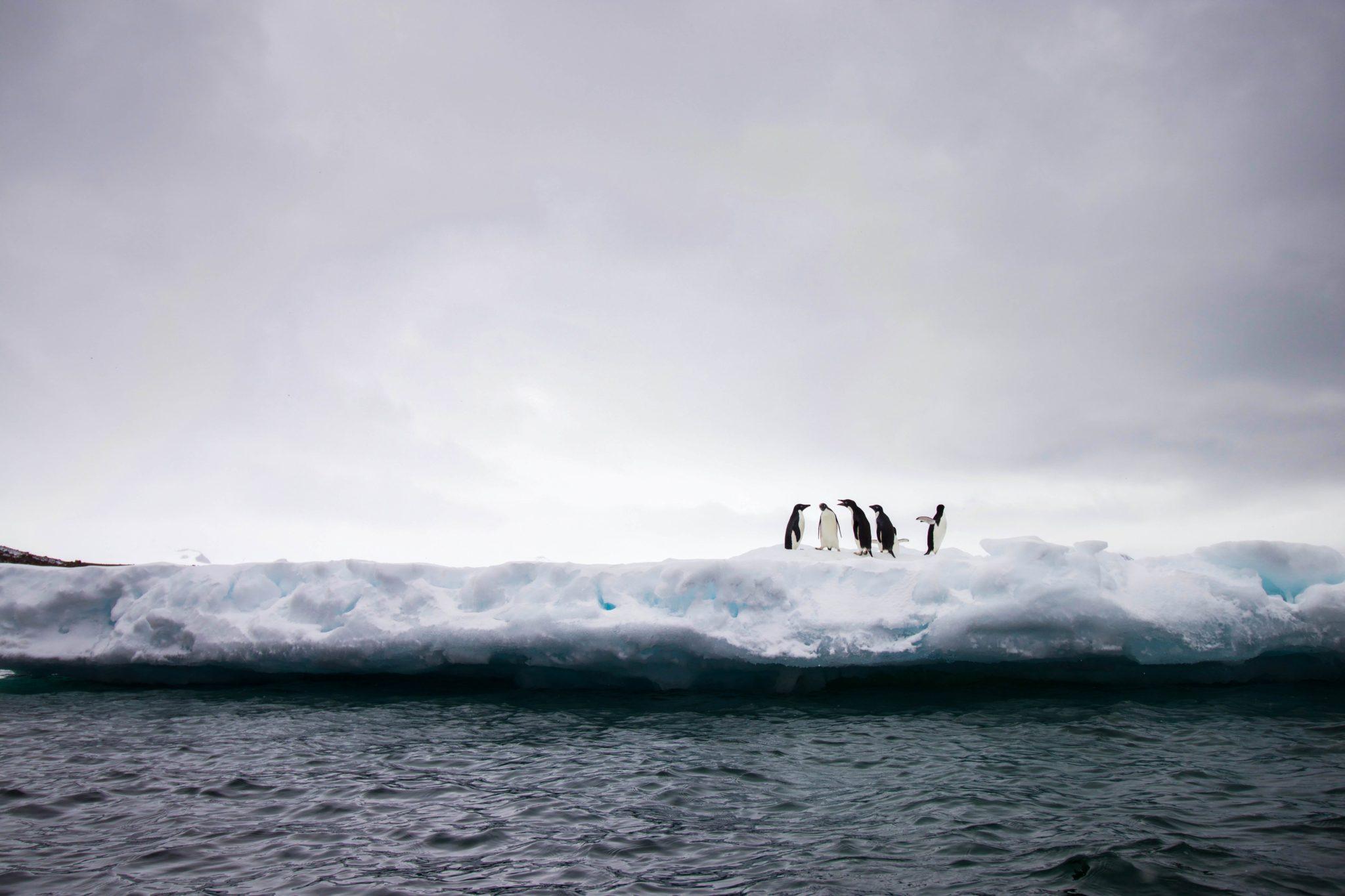 Fünf Pinguine stehen auf dem Eis vor der Kante zum Meer