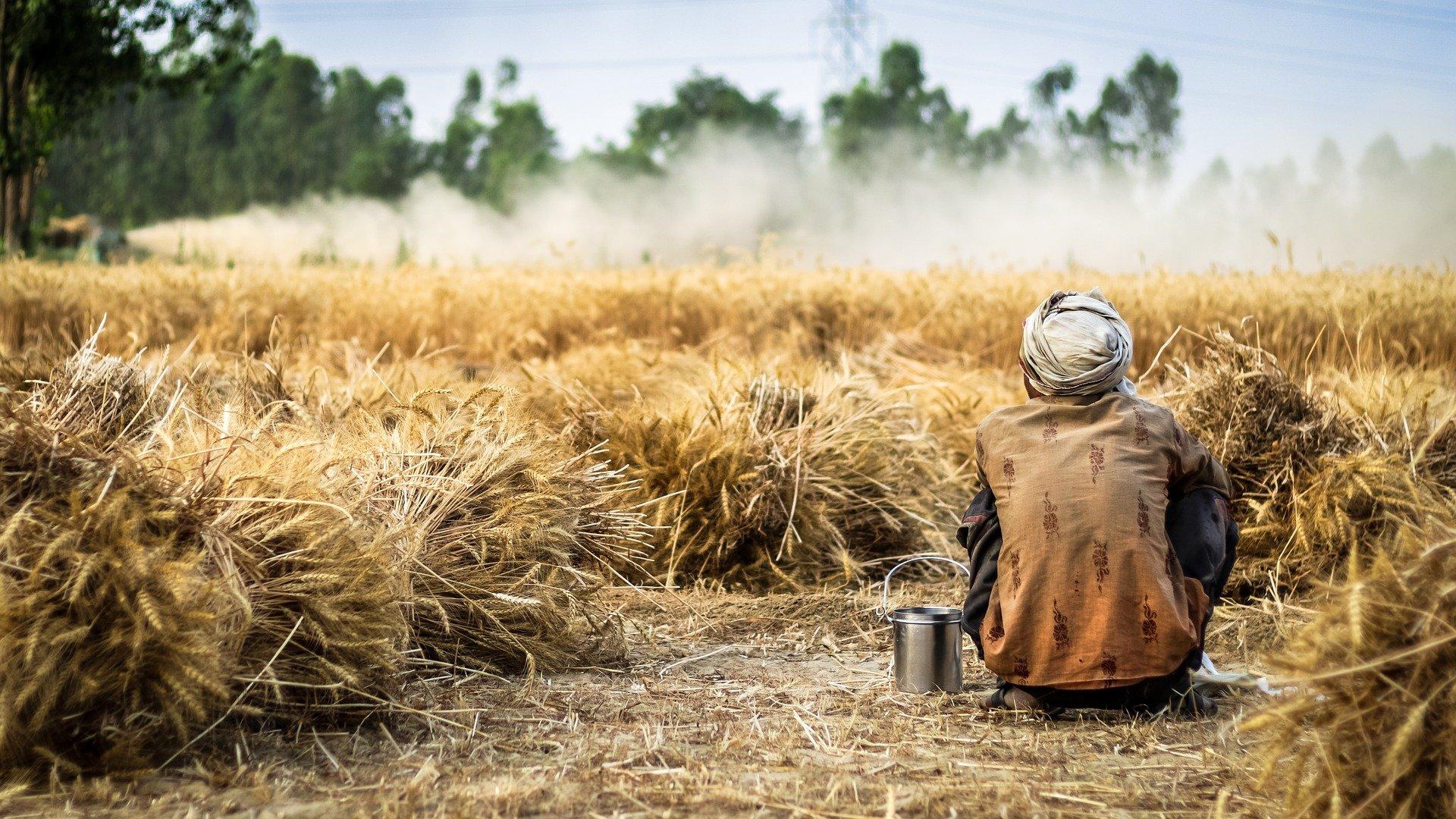 Eine Person in schmutzigen Klamotten und Turban sitzt auf dem Boden vor einem Weizenfeld